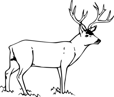 coloring pages of mule deer free coloring pages of mule deer