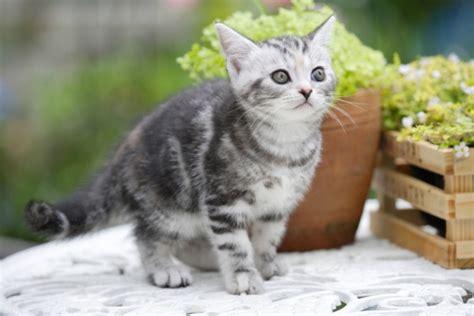come scacciare i gatti dal giardino come tenere lontani i gatti dal giardino