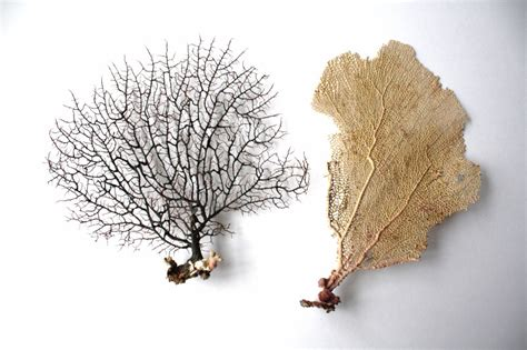 dried sea fans for sale sea fan art sand and sisal