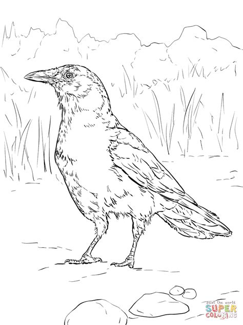 coloring pages of real birds realistic american crow coloring page free printable