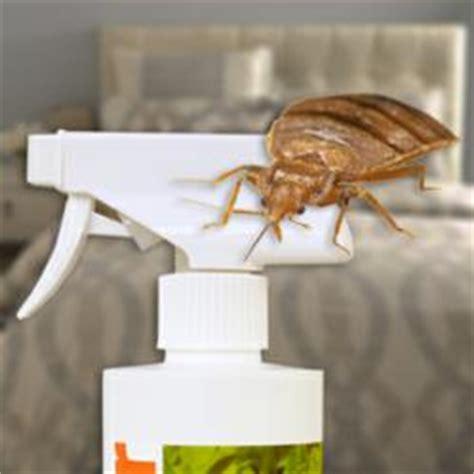 bed bug killer that works study identifies most effective natural bed bug killer