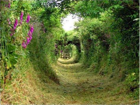 stevens gardens