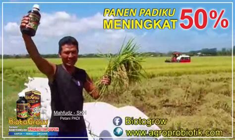 Pupuk Biotogrow Untuk Padi wow biotogrow panen padi meningkat 50