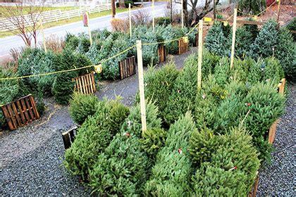 christmas tree nursery baltimore md kingsdene nurseries