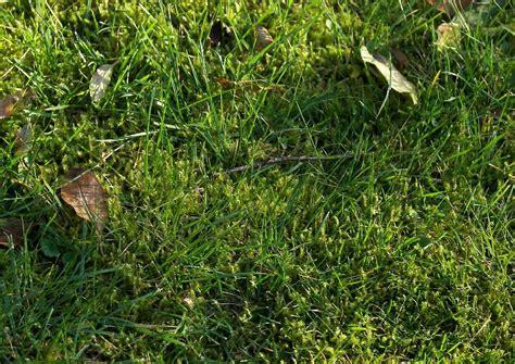 Rasen L Wenzahn Bek Mpfen 2615 by Unkraut Im Rasen Was Tun Unkraut Im Rasen 5 Tipps Was