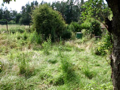 Verwilderten Garten Gestalten by Einen Verwilderten Garten Wieder Herrichten 187 Gartenbob De