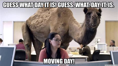 Moving Day Meme - moving day