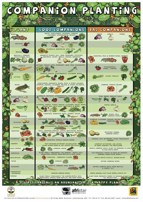 herb growing chart companion planting chart