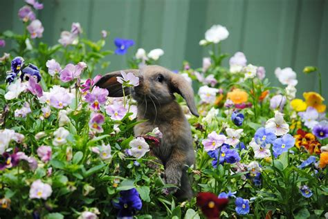 animals sniffing flowers is the cutest thing ever 15