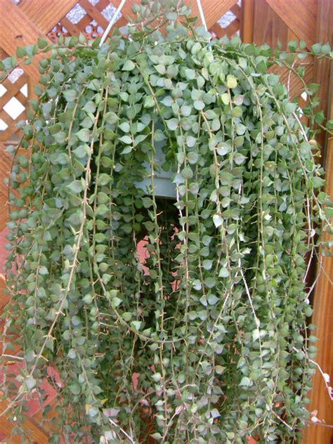 decorative plants for home garden decorative plants for garden dimarlinperez