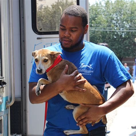 puppies in arkansas 39 dogs and puppies rescued from overcrowded shelters in arkansas animal league
