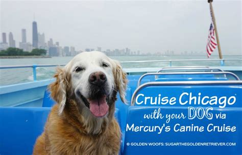 chicago boat tour with dog cruise chicago with your dog via mercury s canine cruise