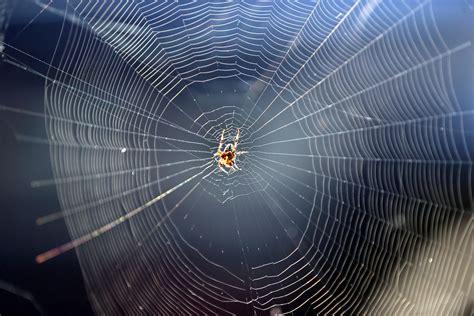 net like the man made spider webs created by scientists
