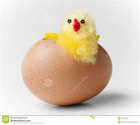 Easter Eggs Ideas by Easter Chicken Hatching Out Of Egg Stock Photo Image Of
