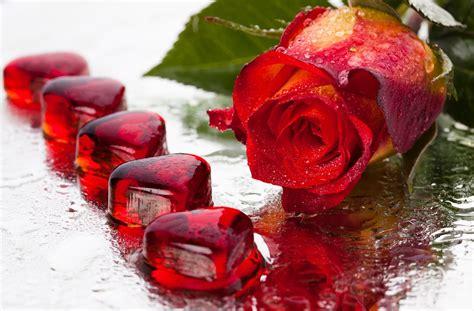 imagenes de corazones y rosas rojas banco de im 193 genes postales de amor para compartir el d 237 a