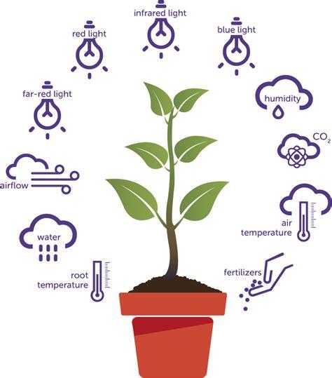 plants for conditions plant paradise plantlab