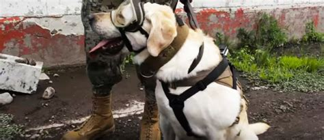 frida rescue frida the rescue helps search for survivors after mexico s deadly earthquake