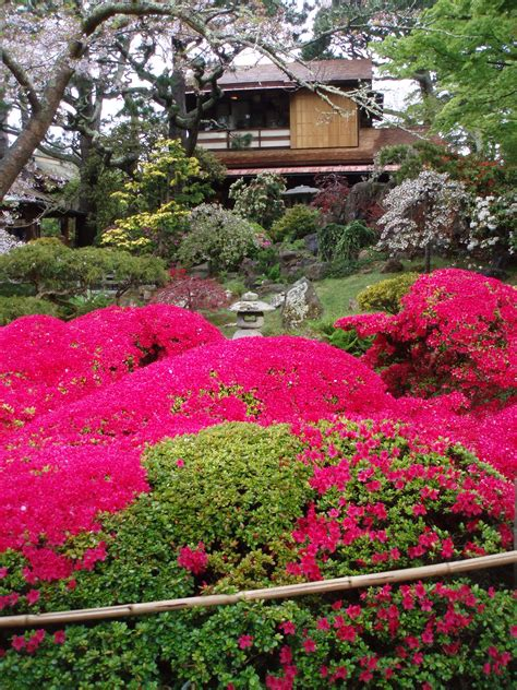 japanese tea garden ontheporch