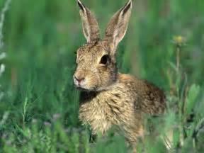 pics photos rabbit wallpaper