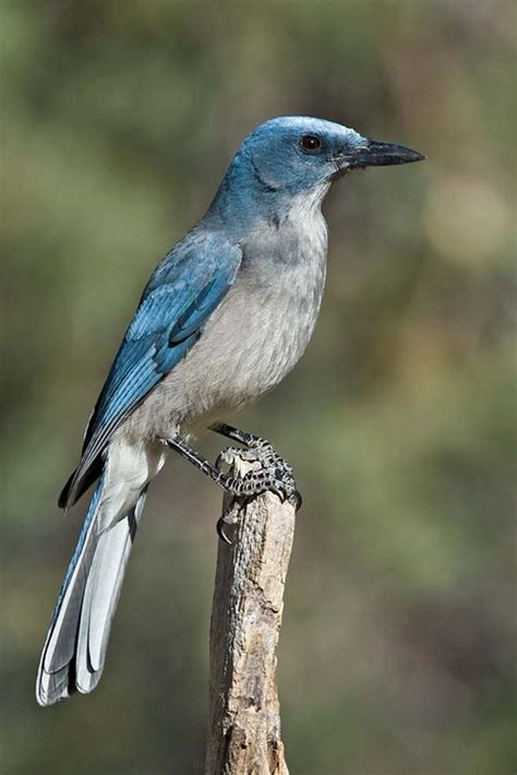 best 25 arizona birds ideas on pinterest pretty birds