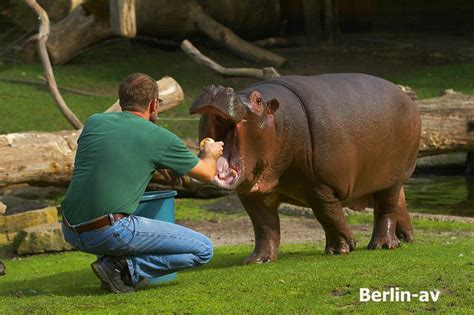 zoologischer garten zoo zoologischer garten berlin av berichte fotos und