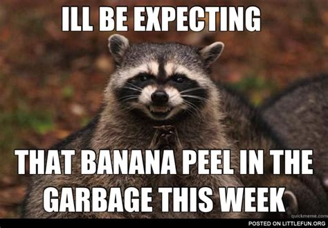 Evil Raccoon Meme - littlefun evil raccoon is expecting