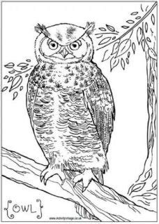 tawny owl coloring page owl worksheets