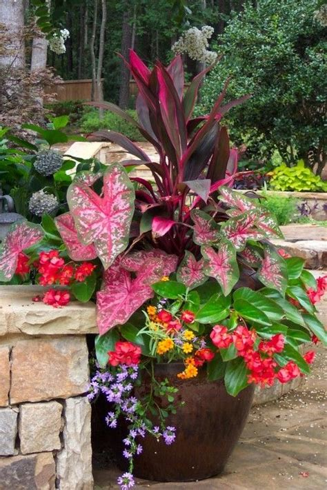 shade loving plants green fingers pinterest beautiful container gardening and planters