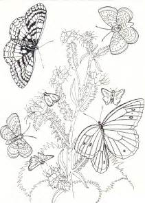 Galerry flower with butterfly coloring pages