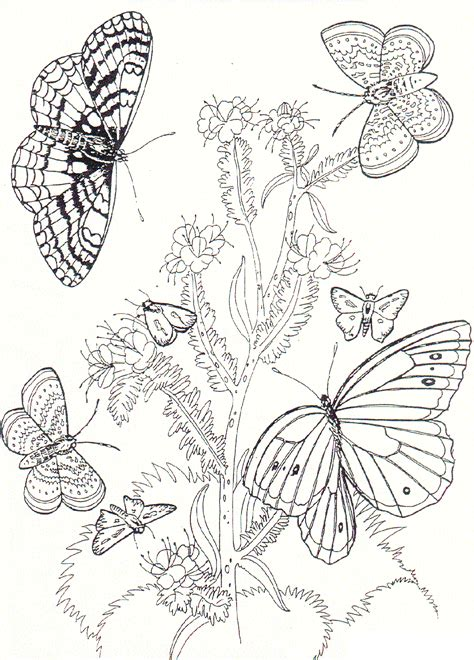 free coloring pictures of flowers and butterflies free printable butterfly coloring pages for