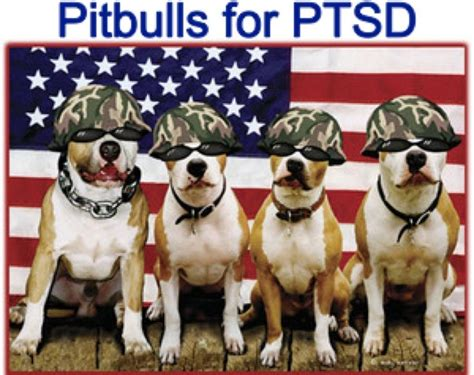 can pitbulls be service dogs pin by renee phipps on don t bully my breed