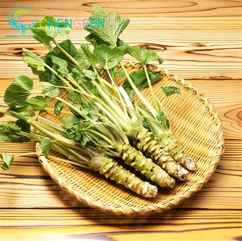 50pcs Lot Wasabi Seeds Japanese Horseradish Seed Vegetable When To Plant Seeds For Vegetable Garden