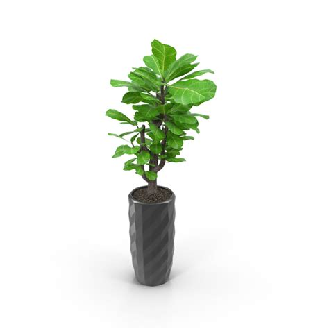 small tree  mirrored pot png images psds