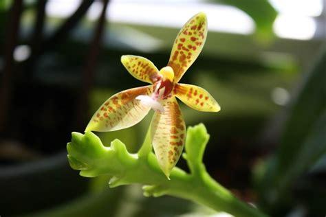 Schädlinge An Hortensien 3124 by Sch 228 Dlinge Bei Orchideen Orchideen Krankheiten Erkennen