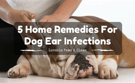 home remedies for ear infections how to cure an ear