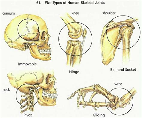 figure joint types foundation figure day 2 basic mechanics the types and