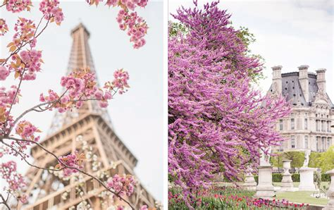 Paris in Bloom @ Georgianna Lane