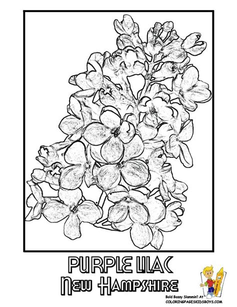 new york state flower coloring page murderthestout