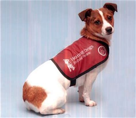 hearing dogs hearing dogs gallery