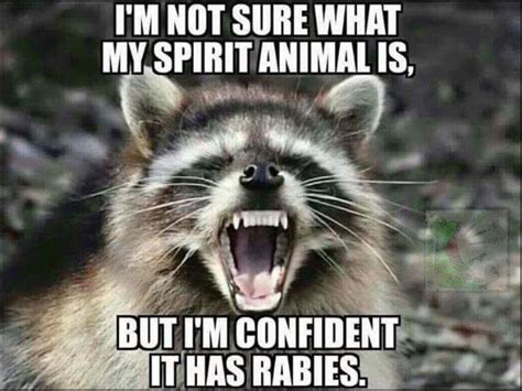 My Spirit Animal yep my spirit animal has rabies