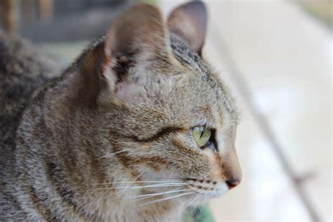Mainan Kucing Kupu Kupu Elektrik 93 gambar hewan lucu gambar binatang lucu imut hewan imut membelai anak kucing binatang