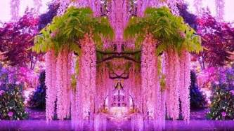 what color is wisteria wisteria