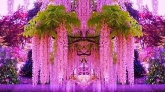 wisteria color wisteria