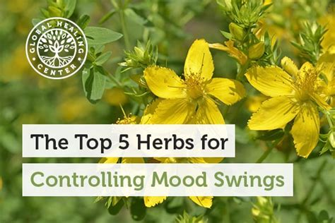 herbs for mood swings the top 5 herbs for controlling mood swings
