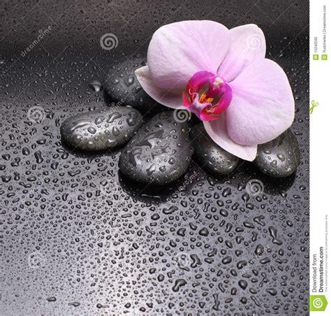 imagenes orquideas negras piedras y orqu 237 dea negras