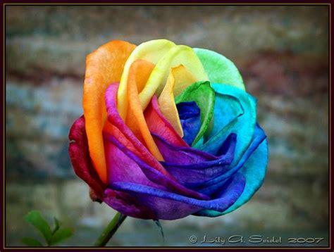 imagenes ozuna una flor psicopedamarce flor multicolor