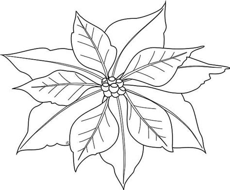 christmas poinsettia coloring sheet coloring pages