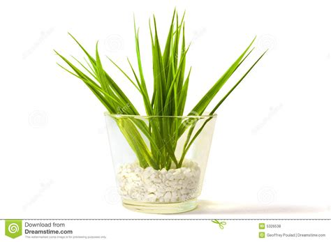 Vase Plants by Plant In A Glass Vase Royalty Free Stock Photos Image