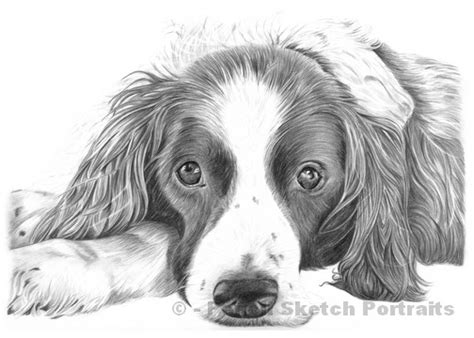 drawing of a puppy drawings pencil sketches of dogs and puppies for sale