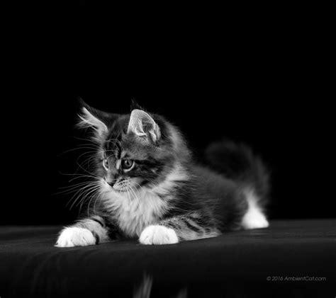 imagenes blanco y negro fondo de pantalla 1080 x 960 en blanco y negro hermosos fondos de pantalla de